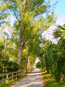Walk in Bermuda